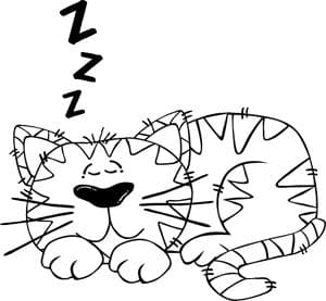 Snurkende kat