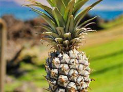Ananasplant: Dè ultieme plant tegen snurken?