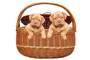 Honden slapen in een mand