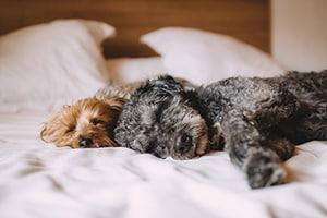 Slapen met je hond