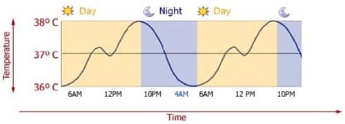 Lichaamstemperatuur over 24 uur