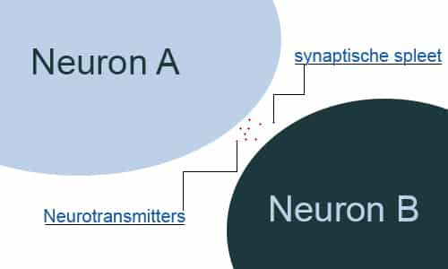 Neurotransmitters uitleg infographic