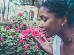 De geur van rozen helpt jou beter leren en onthouden tijdens je slaap!
